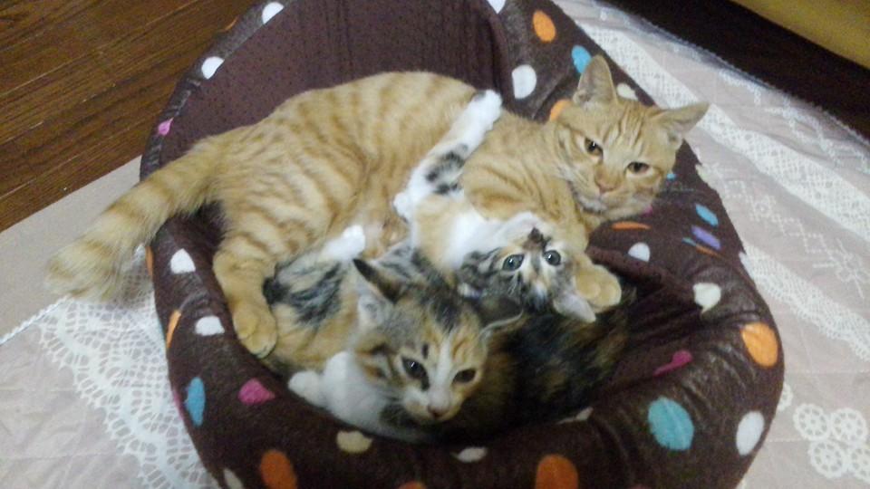 3匹の猫ちゃん